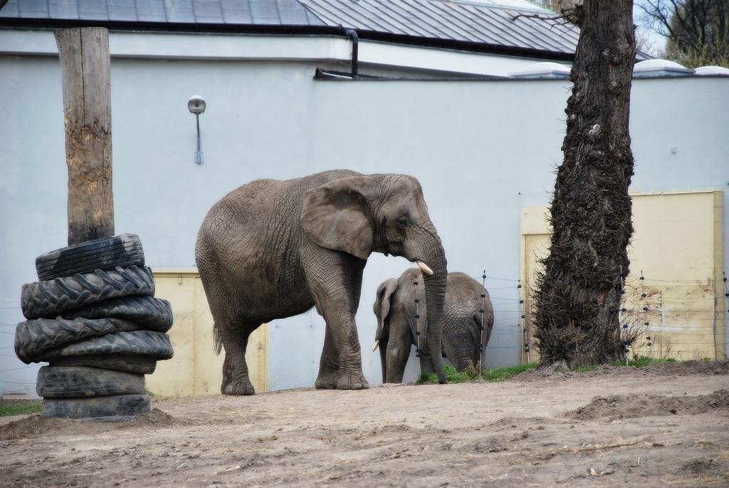 warszawa zoo