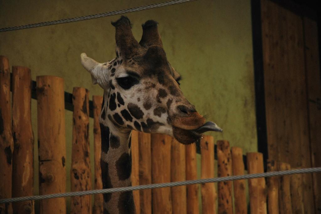 Znalezione obrazy dla zapytania zoo gdansk obrazy