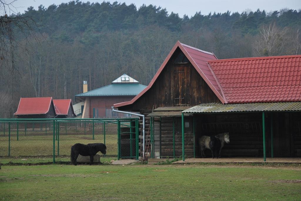 zoo gdańsk