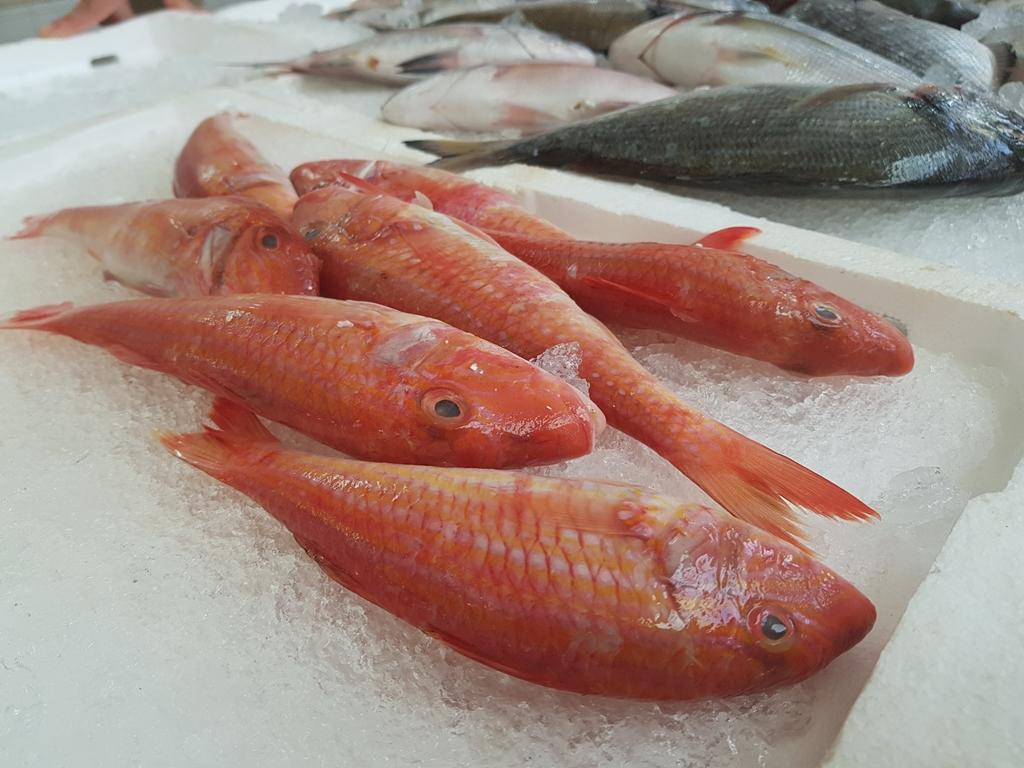 targ rybny w splicie