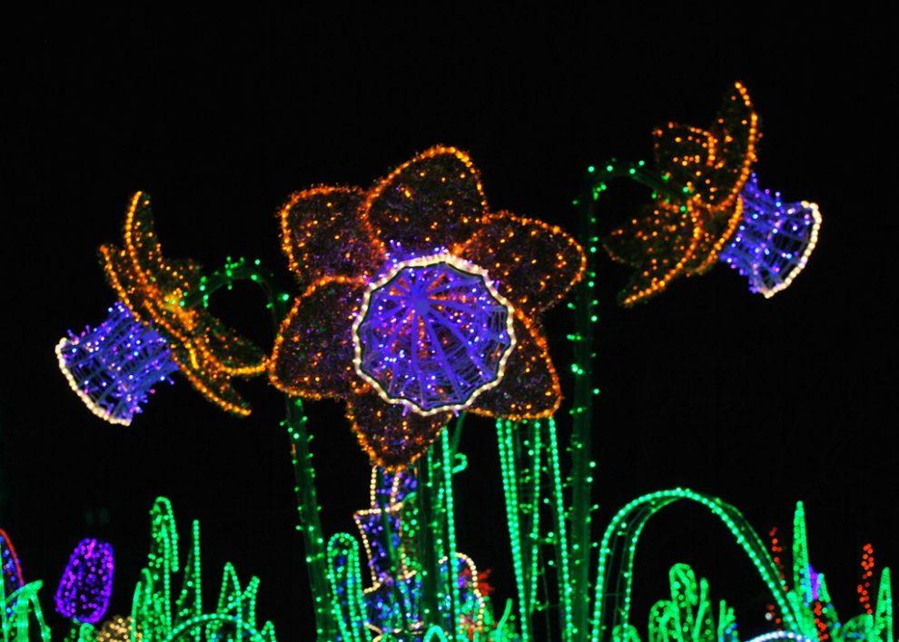Królewski Ogród światła W Wilanowie Zimowy Spacer Po
