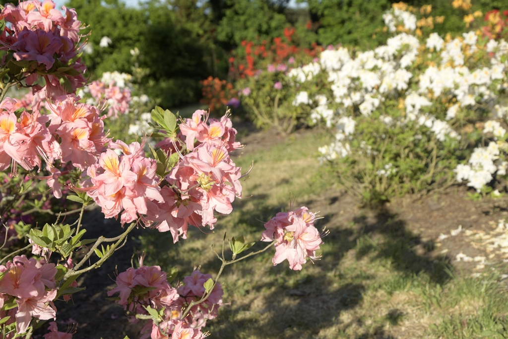 arboretum marcule