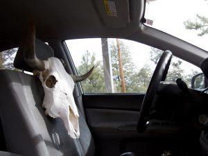 co denerwuje kierowców