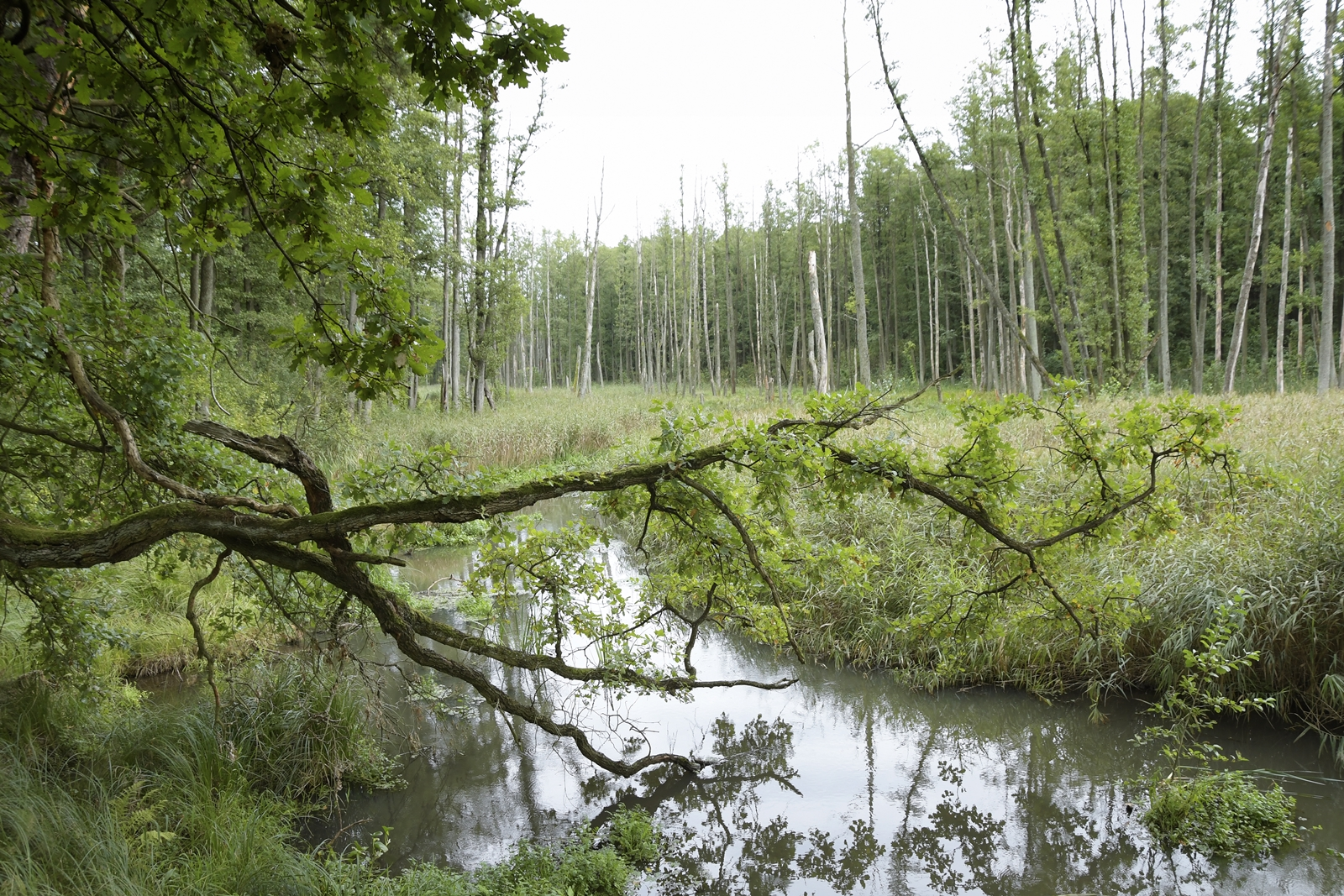 lasy parczewskie