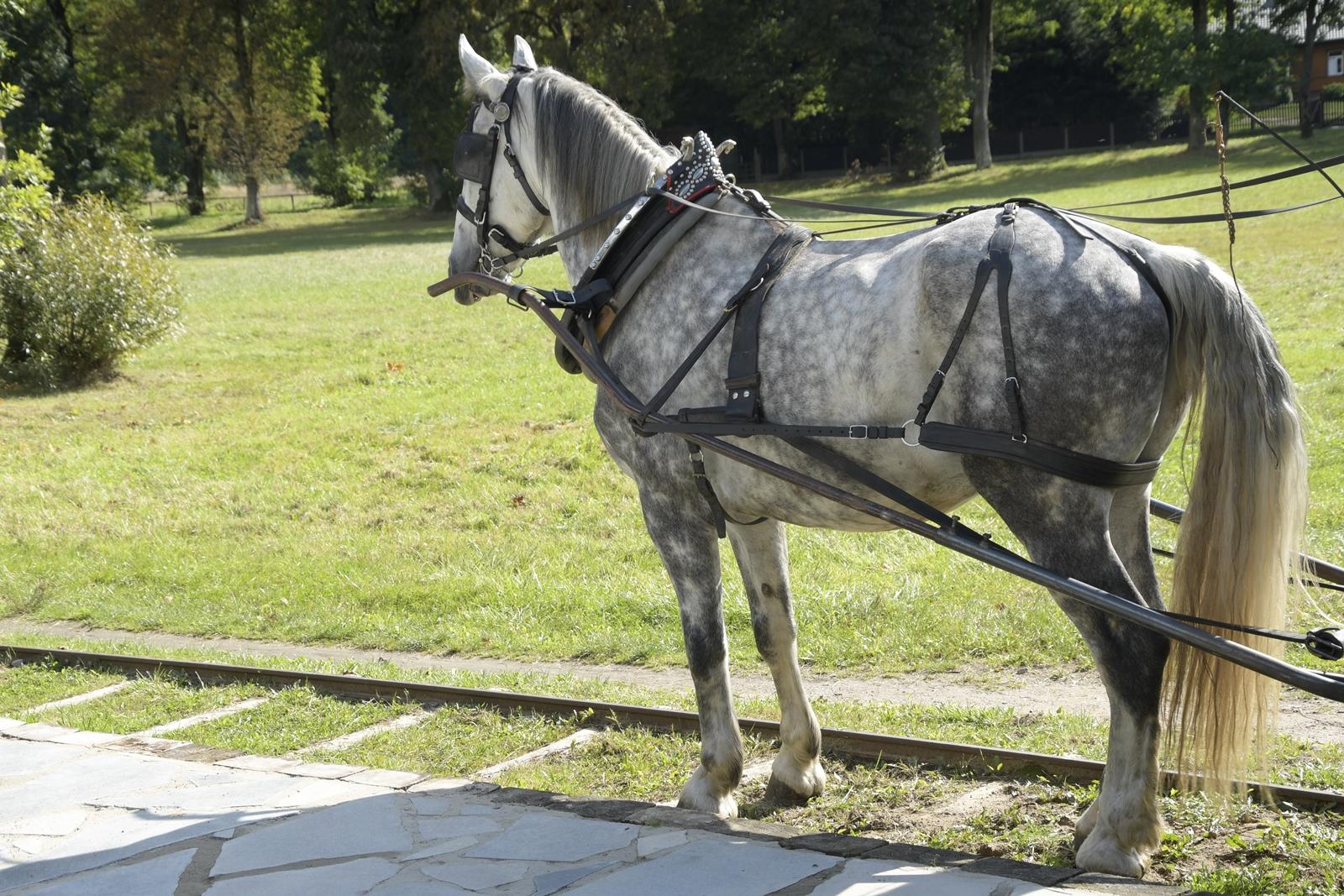 tramwaj konny w mrozach