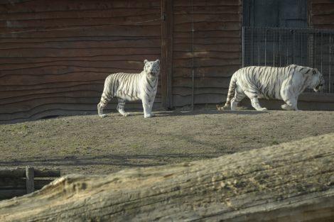 safari borysew