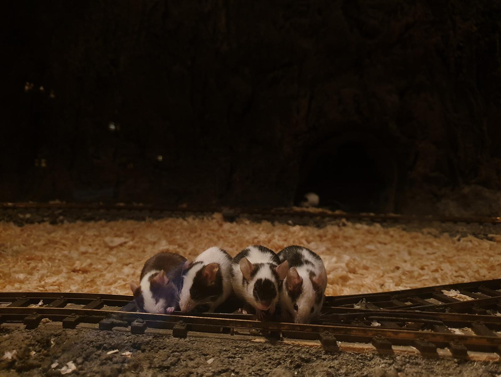 myszogród zakopane
