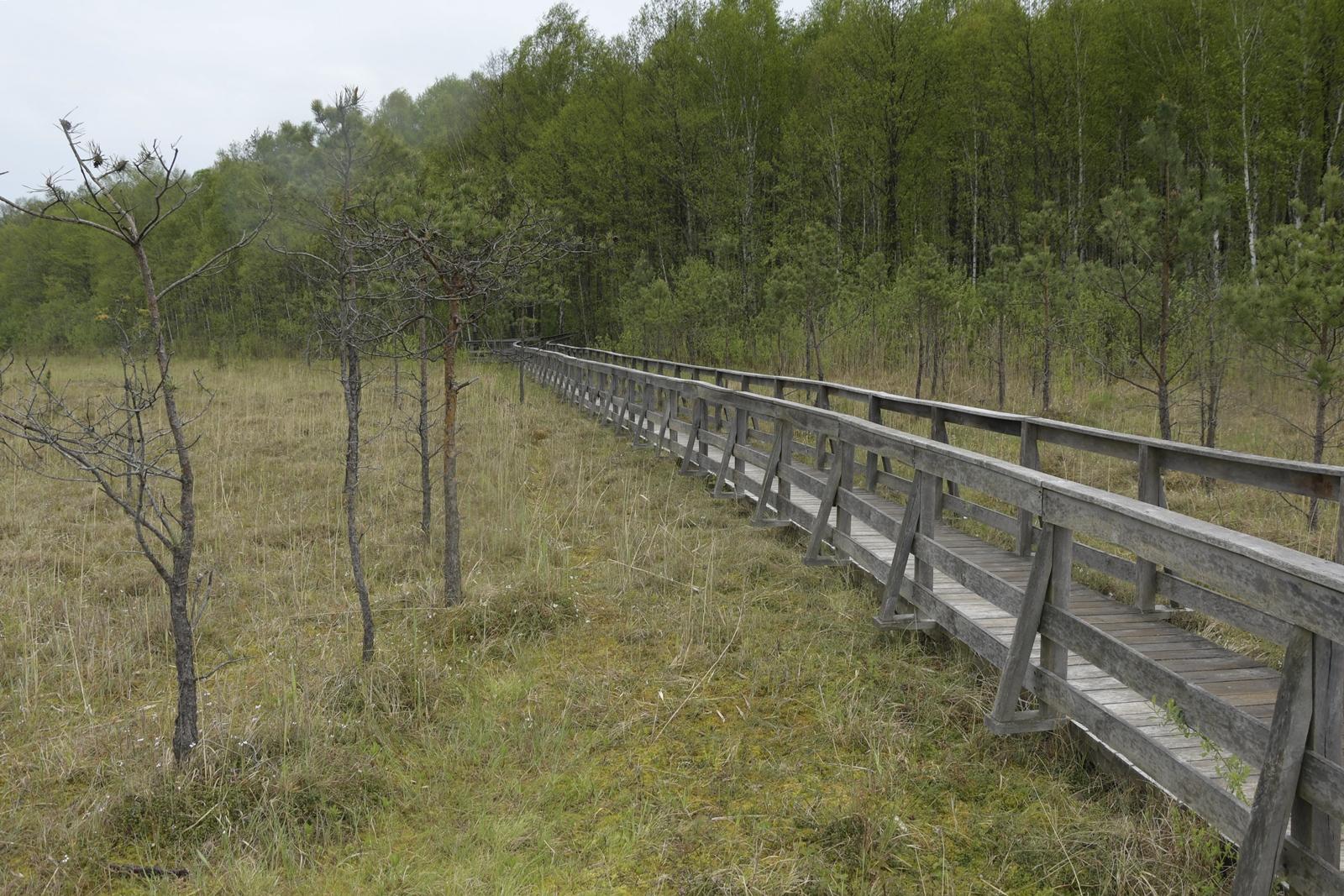 ścieżka przyrodnicza dąb dominik
