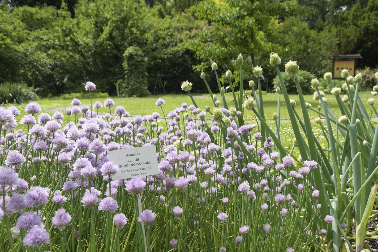 ogród botaniczny uniwersytetu jagiellońskiego