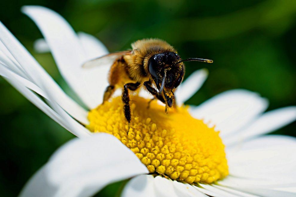 pszczoła motywatorka
