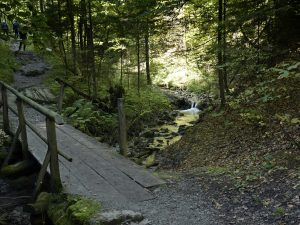 dolina za bramką