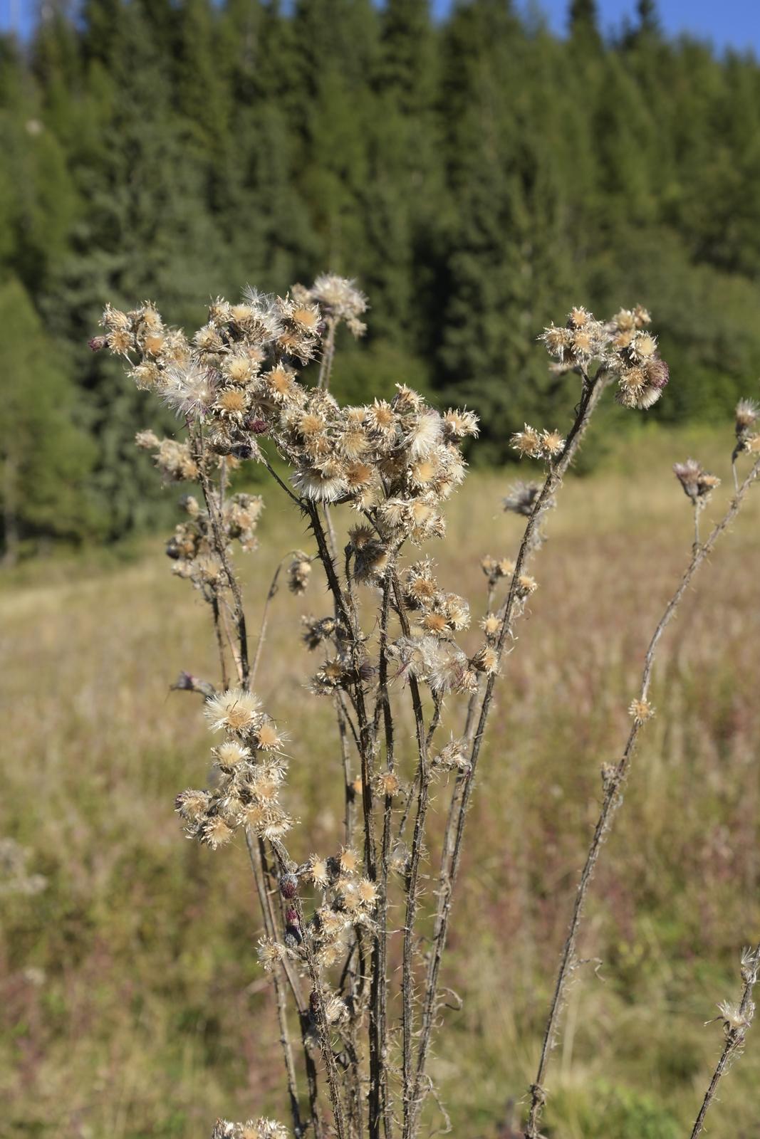 z doliny małej łaki na przysłop miętusi i wielką polanę małołącką