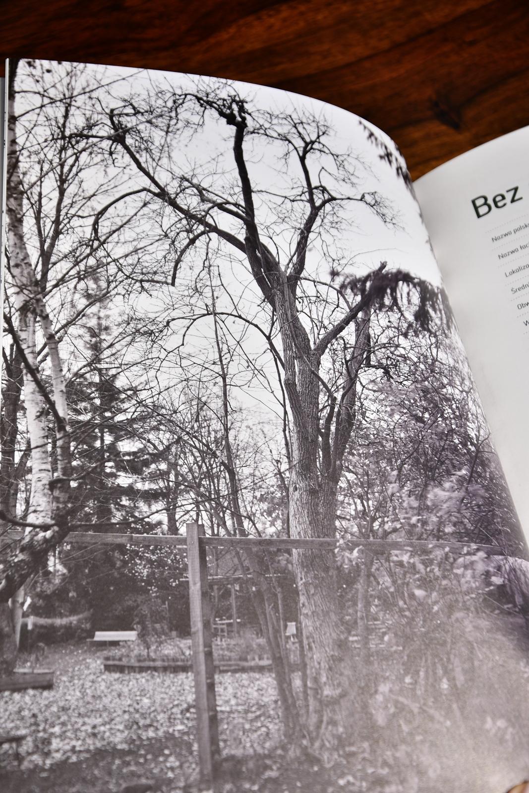 drzewa warszawy książka